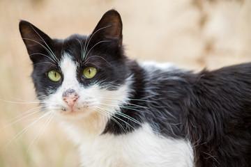 Macro photography of stray cat on the street