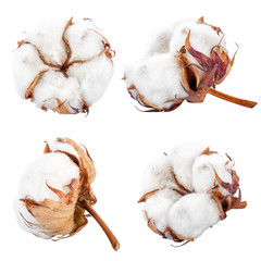 set of cotton flowers