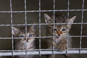 abandoned little kittens in an animal shelter