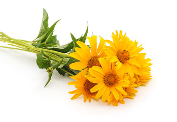 Bouquet of yellow chamomile.