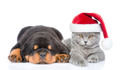 Cat in red christmas hat and sleeping rottweiler puppy. Isolated on white background