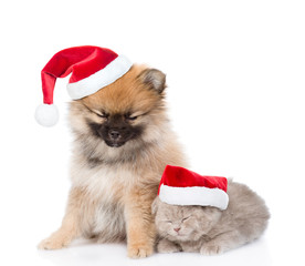 Sleepy puppy spitz and kitten in red christmas hats. isolated on white background
