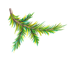 Watercolor Christmas tree branch