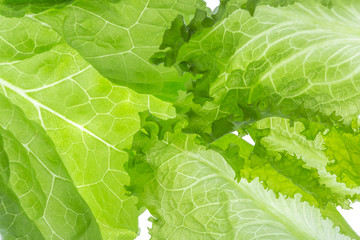 Fresh Lettuce one leaf isolated on white background. Close-up