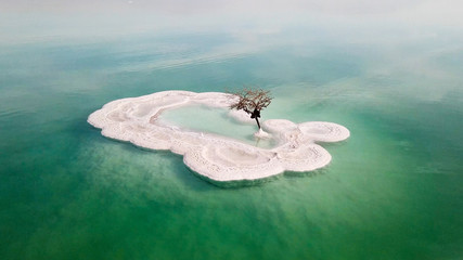 Aerial image of a Bare tree on a salt deposit in the Dead Sea Wall mural