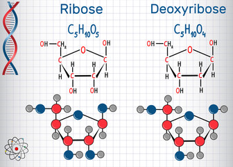 Ribose and deoxyribose molecules, they are monosaccharides and form part of the backbone of DNA and RNA. Structural chemical formula and molecule model