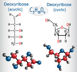 Linear form (acyclic) of deoxyribose and deoxyribose (cyclic form) molecules, they are monosaccharides