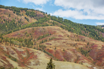 Autumn slope of the Altai Mountains landscape