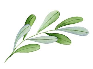 Watercolor hand drawn green branch