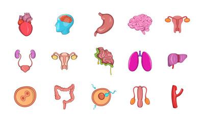 Human internal organ icon set, cartoon style