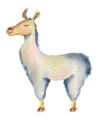 Cute Llama cartoon character watercolor illustration, Alpaca animal, hand drawn style.  Isolated white background
