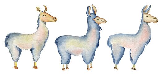 Cute Llama cartoon characters set watercolor illustration, Alpaca animals, hand drawn style.  Isolated white background