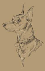 Monochrome Miniature Pinscher vector hand drawing portrait