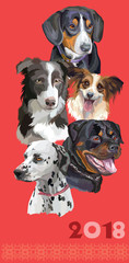 Postcard with dogs of different breeds-5