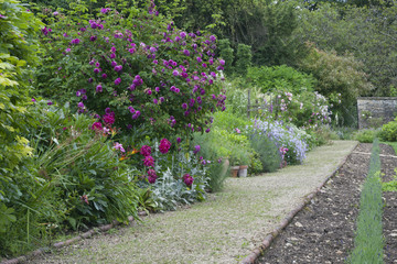 Summer English garden with pink roses, colourful flowers by a stone footpath .
