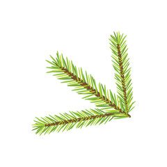 Vector christmas tree branch. isolated new year illustration.