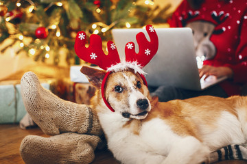 cute puppy in reindeer hat sitting at owner legs in socks at beautiful chrismas tree with lights and presents. seasonal greetings, happy holidays. merry christmas and happy new year concept