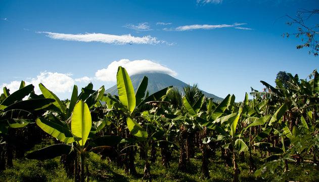 Banana plantation with volcan Concepcion, Nicaragua, Central Amerika