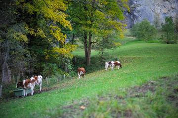 Small village in Swiss