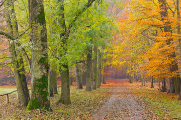 Pathway in the autumn forest, Germany