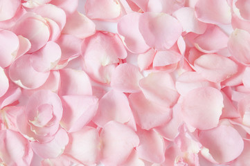 Roses petals background