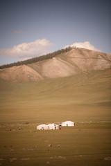Mongolian yurts on a hill