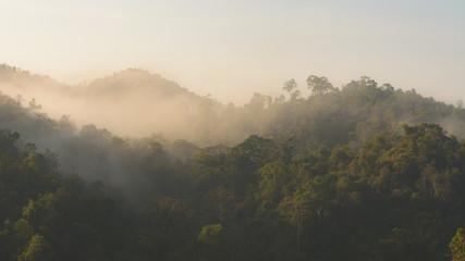 Fog covered forest.