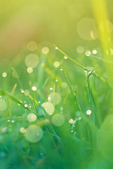 bright spring grass background. bright green grass with water drops at dawn background
