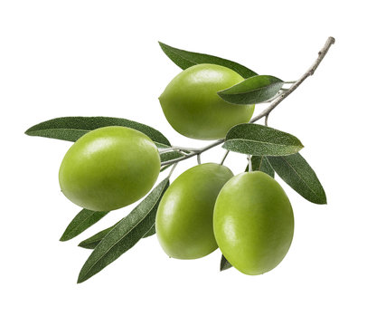 Green olive branch isolated on white background