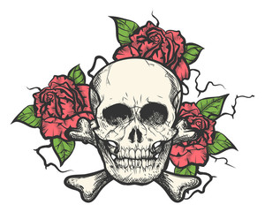 Skull with rose flowers