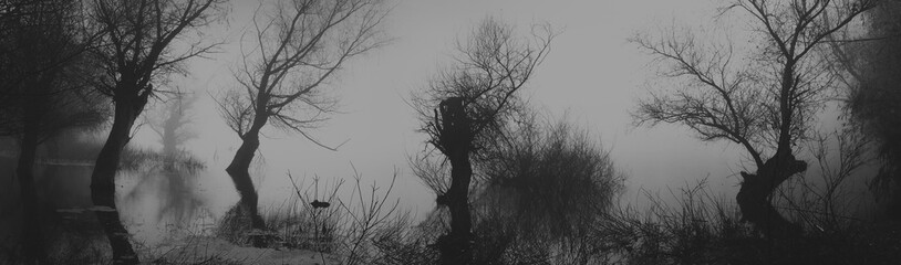 Spooky dark landscape showing silhouettes od trees in the swamp on misty night