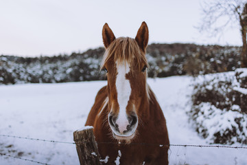 Horse standing in snowy paddock