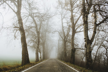 Road in misty woods
