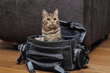 jeune chat tigré dans sac photo de photographe