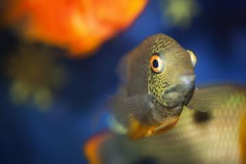 fish with big eyes
