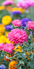 Photo of beautiful spring flowers at blurred background