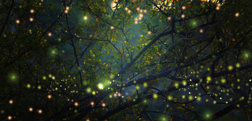 Poster Foret Abstract and magical image of Firefly flying in the night forest. Fairy tale concept.