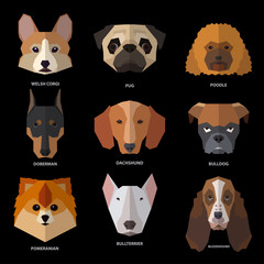 Dogs heads of different breeds. Template for style design.