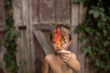 Close-up of shirtless boy holding autumn leaf against cottage