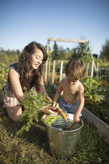 Mother and shirtless son putting carrot in bucket at community garden