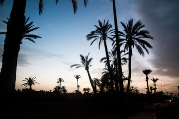 Palm Trees at Sunset - Morocco