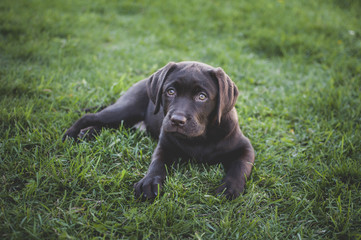 High angle portrait of puppy sitting on grassy field