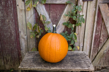 Close-up of pumpkin on table against wooden fence at yard