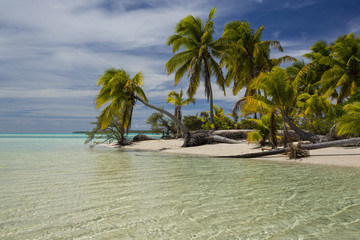 Idyllic view of beach by coconut palm trees against cloudy sky