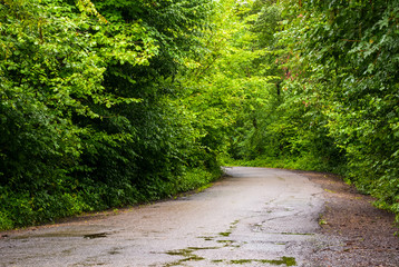 asphalt road through the green forest in mountains at sunrise