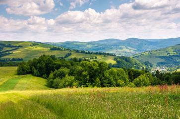 grassy fields in mountainous rural area. lovely rural landscape of Carpathian mountains in summer