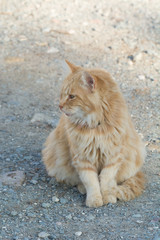 Wild and homeless cat on stone floor. . Adoption of a pet.