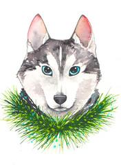 Gray husky dog with pine branch
