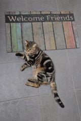 chat tigré tabby sur un paillasson bienvenue