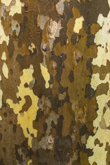 Sycamore bark, brown camouflage, 